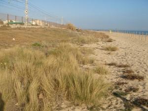 Les roques cobertes de dunes a Vilassar